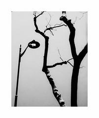 Waiting for the sun (hélène chantemerle) Tags: noirblanc mur lampadaire arbre tronc hiver neige blackwhite wall sreetlight tree truncs snow winter graphic lines