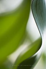 Wave (Daniela Romanesi) Tags: 00724 leaf leaves curves waves soft suave suavidade ondas folha folhas jardim garden green verde
