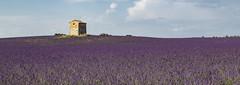 Provence et Lavande 04 (laurentconstantthierry) Tags: provence lavande valensole