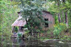 swamp shack (lucymagoo_images) Tags: canon eos rebel sl1 baratariapreserve jeanlafitte national park preserve marrero louisiana swamp shack water nature bayou