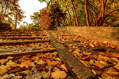 Urban-leaves (Peter Szasz) Tags: october fall autumn debrecen hajdúbihar hungary magyarország colourful afternoon calm tranquil city cityscape urban stair leaves trees canon wide wideangle outside outdoors clear concrete green yellow brown