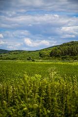 Rád külterület, búzatábla (Detti & Gábor) Tags: magyarország rád táj hungary landscape