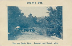 """NW Beulah Benzonia MI 1910 AGRICULTURAL County Card from the SOO-O-O Brothers not the MOO-O-O Brothers Cattle Grazing near the Betsie River in Benzie County (UpNorth Memories - Donald (Don) Harrison) Tags: vintage antique postcard rppc """"don harrison"""" """"upnorth memories"""" upnorth memories upnorthmemories michigan history heritage travel tourism restaurants cafes motels hotels """"tourist stops"""" """"travel trailer parks"""" cottages cabins """"roadside"""" """"natural wonders"""" attractions usa puremichigan """" """"car ferry"""" railroad ferry excursion boats ships bridge logging lumber michpics uscg uslss"""