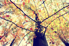 whisper of leaves (EdiB.) Tags: autumn tree leaves forest germany
