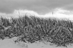 Clouds Over Dune Grass (brucetopher) Tags: beach sea ocean seashore shore coast coastal saltwater salty salt sand estuary flats storm cloudy cloud weather overcast grass seagrass beachgrass dune dunes sanddune sandy weathered windy wind black white blackandwhite bw blackwhite monochrome mono bnw