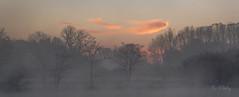 Aurore (H.Valez) Tags: paysage nature lac bord lisière brume aurore nuage rouge orange noir lever jour arbre