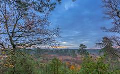 Patchwork Heath (nicklucas2) Tags: landscape cloud heath tree branch leaves autumn