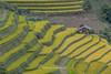 _Y2U2725.0918.Cầu Ba Nhà.Chế Cu Nha.Mù Cang Chải.Yên Bái (hoanglongphoto) Tags: asia asian vietnam northvietnam northwestvietnam landscape scenery vietnamlandscape vietnamscenery vietnamscene terraces terracedfields seasonharvest one house home hillside abstract curve canon canoneos1dsmarkiii canonef200mmf28liiusm tâybắc yênbái mùcangchải chếcunha cầubanhà phongcảnh ruộngbậcthang lúachín mùagặt ngôinhà 1 sườnđồi đườngcong trừutượng mùcangchảimùagặt mùcangchảimùalúachín
