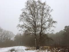 hazy (Sylvia Okkerse) Tags: tree landscape heathland heath sand snow saarlysqualitypictures