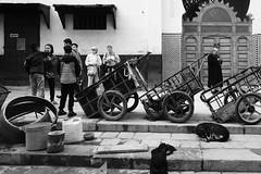Species (explored 2018/12/17) (Tom Levold (www.levold.de/photosphere)) Tags: fuji marokko xpro2 fez xf18mmf2 sw bw people candid street carts karren