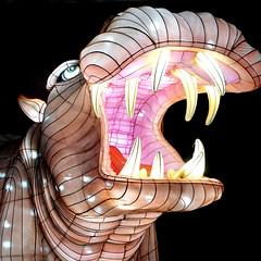 Angry Hippo (Seeing Visions) Tags: 2018 unitedstates us losangelescounty la arcadia laarboretum moonlightforest chineselanternfestival night dark colorful cloth light angry hippo hippopotamus openmouth teeth square raymondfujioka