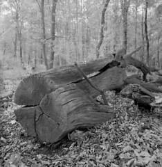 051118004 (salparadise666) Tags: rolleiflex sl66 fomapan 10064 caffenol cl 20min nils volkmer square format medium 6x6 vintage slr film analogue landscape nature wood hannover region lower saxony germany