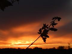 Avondschemering | zonsondergang (Frank Berbers) Tags: nikoncoolpixs9500 schemering dämmerung crépuscule twilight hoensbroek zuidlimburg limburgslandschap nederland