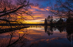 Green Lake Sunset in the Trees (www.mikereidphotography.com) Tags: seattle lake sunset greenlake fuji gfx50s zeiss 18mm