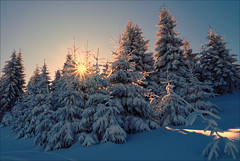 zimowo (witoldp) Tags: beskidy beskid winter poland landcape snow tree forest