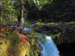 Spirit Falls Trail on Little White Salmon River in WA (Landscapes in The West) Tags: spiritfalls hike littlewhitesalmonriver columbiarivergorge washington trail landscape west waterfall pacificnorthwest