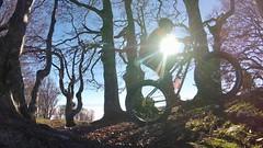 Some Sun Felt Good (29in.CH) Tags: fall autumn fatbike ride 16112018