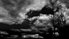 background, wallpaper, hintergrundbild (free) (lucianomandolina) Tags: background wallpaper hintergrund bild picture image widescreen tree baum bäume himmel sky