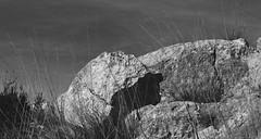 """SDIM9612 - sd1 - """"Immagine"""" - petri c.c. 50mm f2 (ciro.pane) Tags: sigma sd1 merrill foveon promontorio minerva punta campanella estate smartino novembre italy italia italien italie immagine bianco nero 黒と白 ασπρόμαυρη schwarz und weis 黑色和白色 чернобелый emozioni riflessioni"""