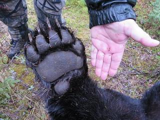 Newfoundland Caribou and Moose Hunting 9