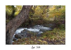 _ATP3455 (anahí tomillo) Tags: nikond7500 sigma1750f28 naturaleza nature paisaje landscape otoño autunm asturias