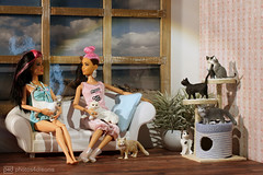 cat talk (photos4dreams) Tags: dress barbie mattel doll toy photos4dreams p4d photos4dreamz barbies girl play fashion fashionistas outfit kleider mode puppenstube tabletopphotography diorama scenes 16 canoneos5dmark3 schleich cat ooak plastic spielzeug plastik photo katze repaint custom oneofakind upgrade dolldesigner design mainecoon