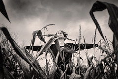 As the Crow Flies (drei88) Tags: specter scarecrow windswept desolate dreary drab grim stark weathered frozen october autumn harvest fleeting memory racing drama shadow dark forlorn atmosphere energy charged noir imagination realization vision universe childhood wizardofoz