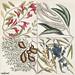 Sorrel Tree (Frutex follis oblongs acuminatis) and Acacia with rofe-colored flowers (Pseudo-acacia bifpida floribus rofeis, Candle-berry Myrtle (Myrtus Brabantice fimilis Carolinenfis) from The Natural History of Carolina, Florida, and the Bahama Islands