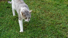 2015-09-20_16-55-01_ILCE-6000_DSC00259 (Miguel Discart (Photos Vrac)) Tags: 2015 94mm animal animalphotography animals animalsupclose animaux cat cats chat chats colakli e1670mmf4zaoss focallength94mm focallengthin35mmformat94mm holiday hotel ilce6000 iso100 kamelya kamelyaworld nature naturephotography pet sony sonyilce6000 sonyilce6000e1670mmf4zaoss summer turkey turquie vacance vacation