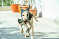 DSC03481 (dkyou1122) Tags: 狗 dog