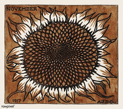November Sunflower (1917) by JJulie de Graag (1877-1924). Original from the Rijks Museum. Digitally enhanced by rawpixel. (Free Public Domain Illustrations by rawpixel) Tags: nam antique art artwork bloom blossom botanic botany closeup drawing element fashion flora flower garden graphic handdrawn illustrated illustration juliedegraag month name nature november novembersunflower old pdrijks petal petals plant publicdomain rijksmuseum sketch sunflower symbol texture vintage watercolor woodcut