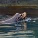 French Creek sea lion