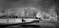 dreaming of... (♥Adriënne - for a better and peaceful world -) Tags: monochrome blackwhite winter white trees surroundings magical panasonicfz18 2009 ♥adriënne addyvanrooij terneuzen otheensekreek thenetherlands