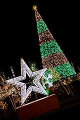 brightlightswindsor6_dec2018 (YenC) Tags: brightlights christmas lights windsor jacksonpark christmastree