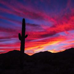 This Sky is on FIRE (gypsy.pics) Tags: fire nature cactus outside arizona az hiking sun