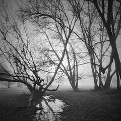 (a.pierre4840) Tags: olympus om2n zuiko 24mm f28 35mmfilm ilford ilfordfp4 fp4 bw blackandwhite monochrome noiretblanc squareformat 11 fotor trees reflection reflections mist sunrise silhouette oxfordshire england atmosphere