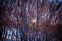 IMG_9572 (Giuseppe.Coppola) Tags: nature natura alberi sole arancio boschi neve