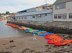 RockportAvailableKayaks (fotosqrrl) Tags: rockport massachusetts streetphotography beach kayaks rentals dog