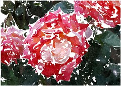 In brünstiger Andacht eil ich zu Dir (amras_de) Tags: rose rosen ruža rosa ruže rozo roos arrosa ruusut rós rózsa rože rozes rozen roser róza trandafir vrtnica rossläktet gül blüte blume flor cvijet kvet blomst flower floro õis lore kukka fleur bláth virág blóm fiore flos žiedas zieds bloem blome kwiat floare ciuri flouer cvet blomma çiçek zeichnung dibuix kresba tegning drawing desegnajo dibujo piirustus dessin crtež rajz teikning disegno adumbratio zimejums tekening tegnekunst rysunek desenho desen risba teckning çizim