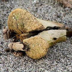 Momento Mori 4 (arbyreed) Tags: arbyreed ttt momentomori bone sand texture close closeup old allthingsdie