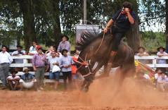 Rodolfo e Pedra Moura da Ressaca (Eduardo Amorim) Tags: gaúcho gaúchos gaucho gauchos cavalos caballos horses chevaux cavalli pferde caballo horse cheval cavallo pferd pampa campanha fronteira quaraí riograndedosul brésil brasil sudamérica südamerika suramérica américadosul southamerica amériquedusud americameridionale américadelsur americadelsud cavalo 馬 حصان 马 лошадь ঘোড়া 말 סוס ม้า häst hest hevonen άλογο brazil eduardoamorim gineteada jineteada