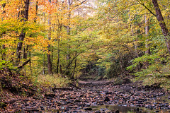 Little Yellow Creek (Back Road Photography (Kevin W. Jerrell)) Tags: autumn autumnbeauty nature bellcounty middlesboro kentucky nikond7200 backroadphotography fall fallcolor cumberlandgapnationalhistoricalpark colorful