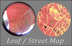 LeafMap2 (FolsomNatural) Tags: leaf map comparison compare similarity objects patterns