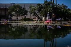 San Diego-14 (Timken Museum of art) (LTL78) Tags: balboapark parque sandiego usa2018 california fujifilm x100t lirio