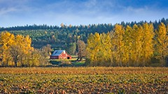 Barn Pumpkin Field 2218 D (jim.choate59) Tags: jchoate on1pics barn pumpkin autumn fallseason trees rural rustic field harvest oregon molallaoregon hss