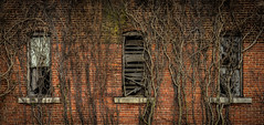 (Rodney Harvey) Tags: abandoned school indiana eel river brick architecture windows vines overgrowth creeping growth rural decay
