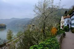 Autumn hangs on (halifaxlight) Tags: austria durnstein wachauvalley riverdanube landscape river valley road houses autumn fall trees shrubs hillsides