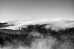 Mysterious forest... (ZeGaby) Tags: blackandwhite brumes mist naturephotography noiretblanc pentaxda300mm pentaxk1 gérardmer vosges france fr
