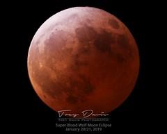 Super Blood Wolf Moon (treydavisonline) Tags: moon eclipse blood wolf super nikon d750 celestron telescope nexstar
