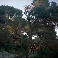 Park Dalmau (fedorrrz) Tags: calella spain 120 kiev88 middleformat film ishootfilm park trees sunset pine square